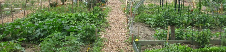Photo of the East Brunswick Community Garden